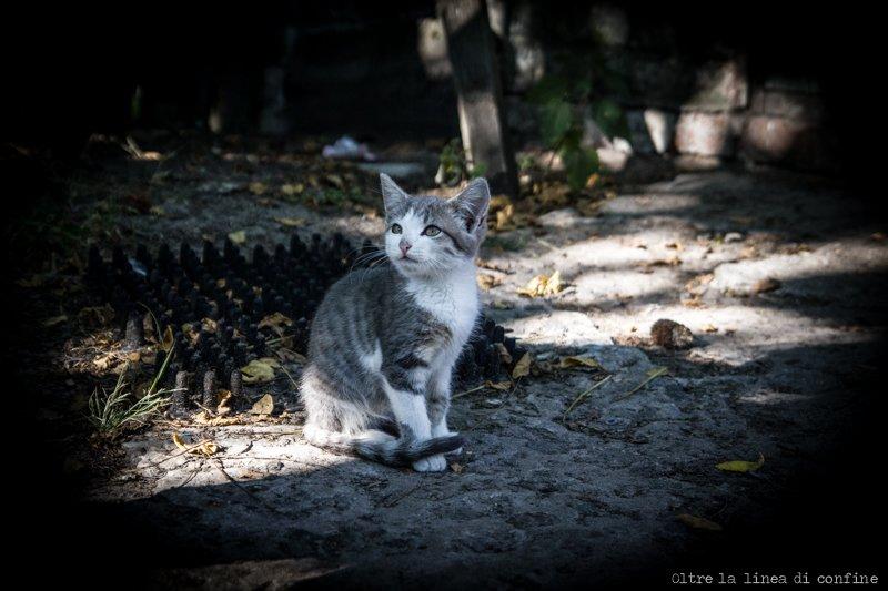 cat-gatto-parishev-chernobyl