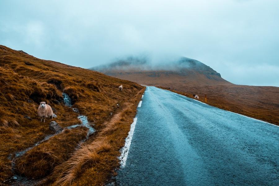 Isole Faroe Pecore