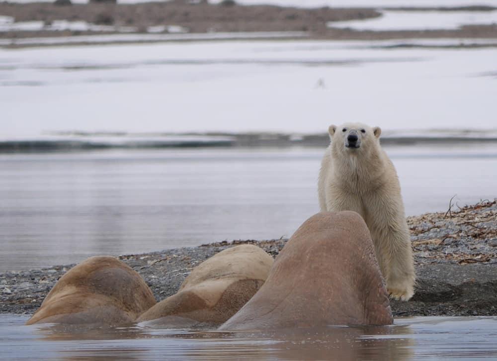 Svalbard Aurora Boreale